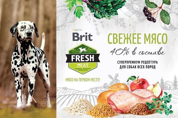 Новинка - сухие корма Brit Fresh!