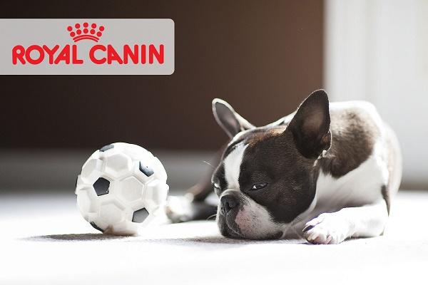 Повышение цен на продукцию Royal Canin