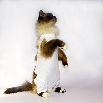 OSSO послеоперационная попона для кошек р.